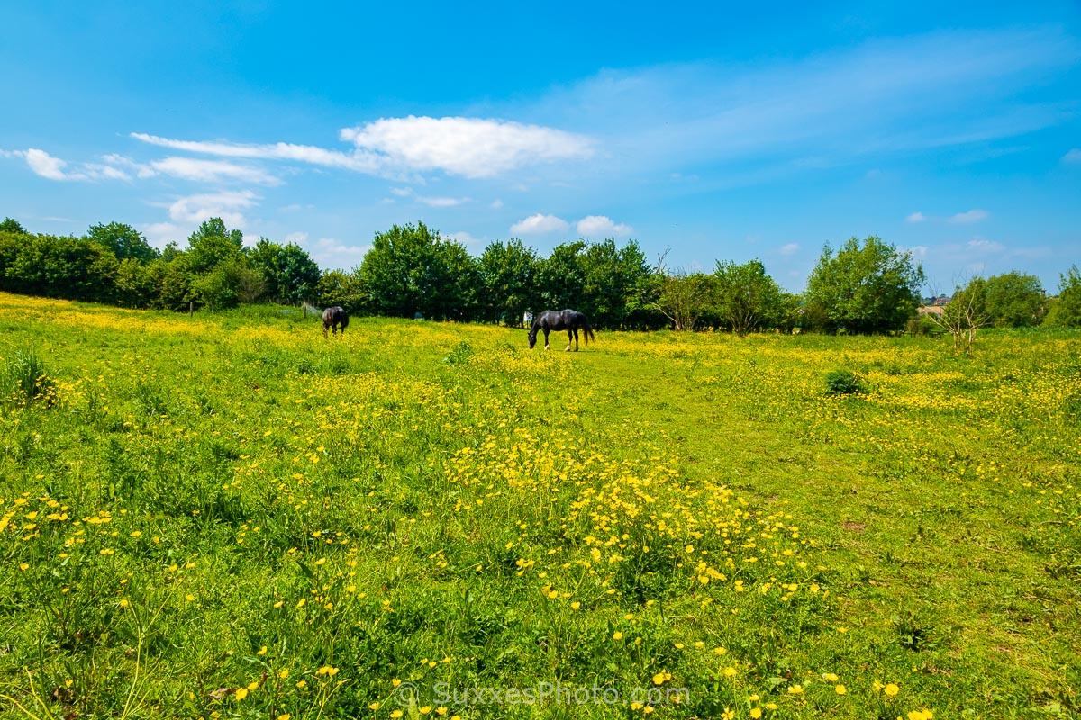 medway kent 2018-05-28 096 - UK Landscape Photography
